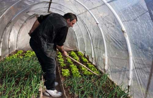 Indoor Organic Garden